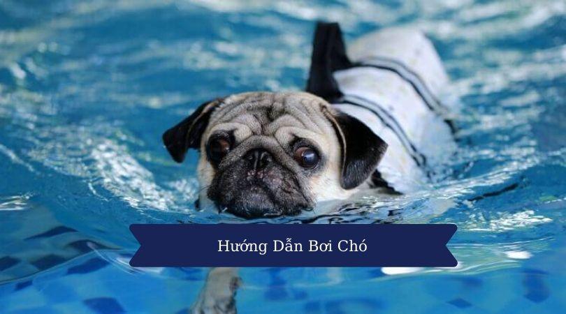Kỹ thuật bơi chó
